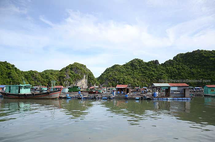 Floating fish village